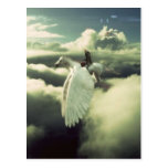Pegasus Rider - CDO Postcard