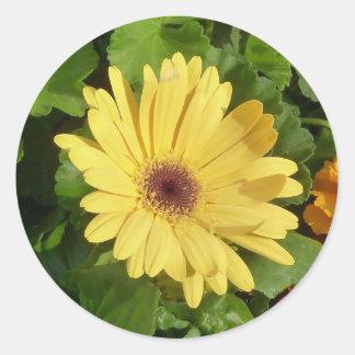 Pegatina amarillo de la margarita de Gerber