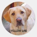 Pegatina amarillo del laboratorio