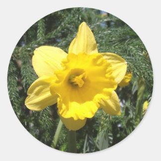 Pegatina amarillo del narciso