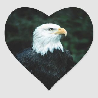 Pegatina americano del corazón de Eagle calvo