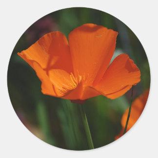 Pegatina anaranjado de la amapola de California