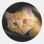 Pegatina anaranjado del gatito