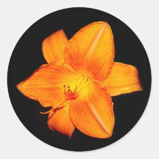 Pegatina anaranjado del lirio de día