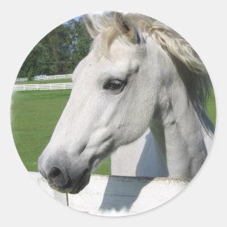 Pegatina árabe blanco del caballo