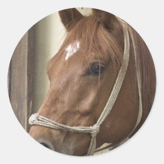 Pegatina árabe de los caballos