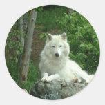 Pegatina ártico del lobo
