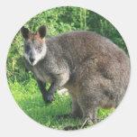 Pegatina australiano del canguro