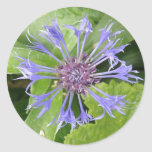 Pegatina azul del Cornflower