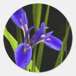 Pegatina azul del iris