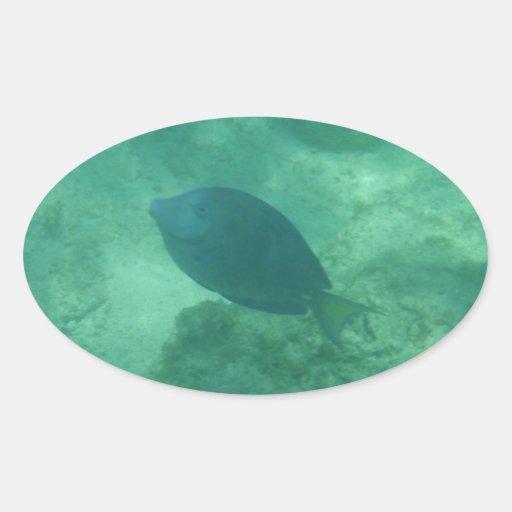 Pegatina azul del óvalo de los pescados de Bahamas