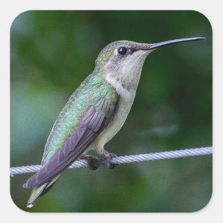 Pegatina azul y verde del colibrí - pequeño