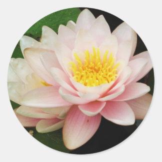 Pegatina blanco de la flor de Waterlily de Lotus