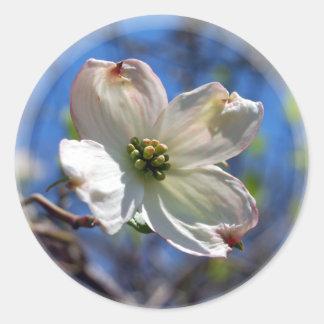 Pegatina blanco de la flor del Dogwood