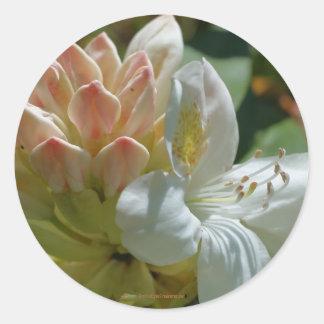 Pegatina blanco de la fotografía de la flor de la
