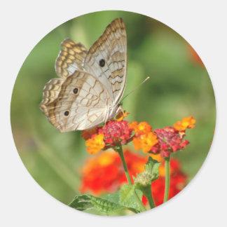 Pegatina blanco de la mariposa de pavo real