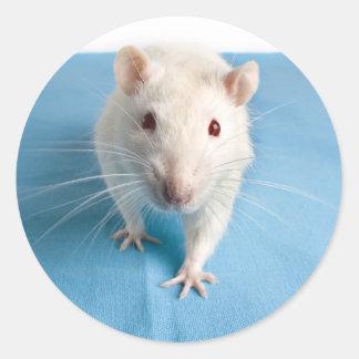 Pegatina blanco de la rata