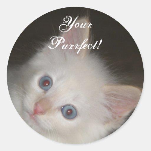 Pegatina blanco del gatito: Su pegatina perfecto