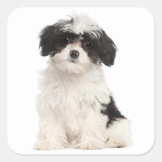 Pegatina blanco y negro del perro de perrito de pegatina cuadrada
