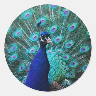 Pegatina bonito del pavo real