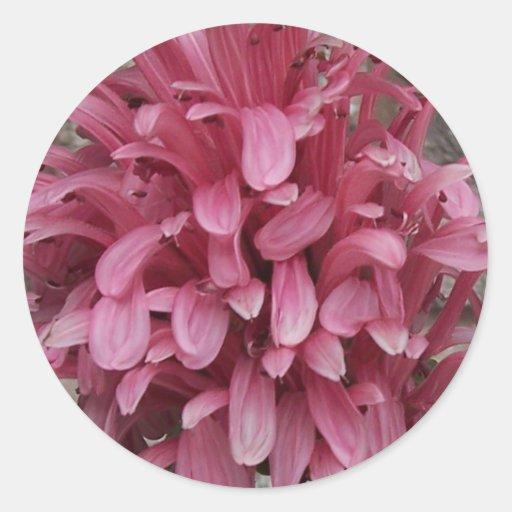 Pegatina brasileño de la flor del penacho