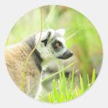 Pegatina - bulto atado anillo del lemur