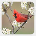 Pegatina cardinal