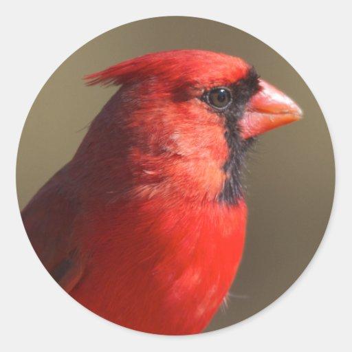Pegatina cardinal de sexo masculino del retrato