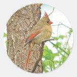 Pegatina cardinal rojo del pájaro