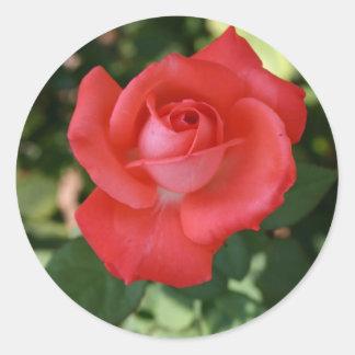 Pegatina color de rosa anaranjado rojo grande del