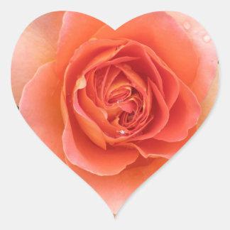 Pegatina color de rosa coralino del corazón