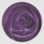 Pegatina color de rosa púrpura oscuro