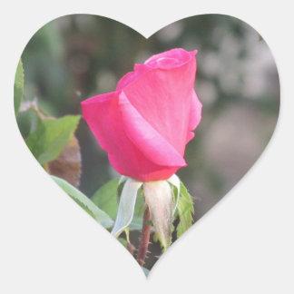 Pegatina color de rosa rosado