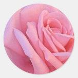 Pegatina color de rosa rosado del boda
