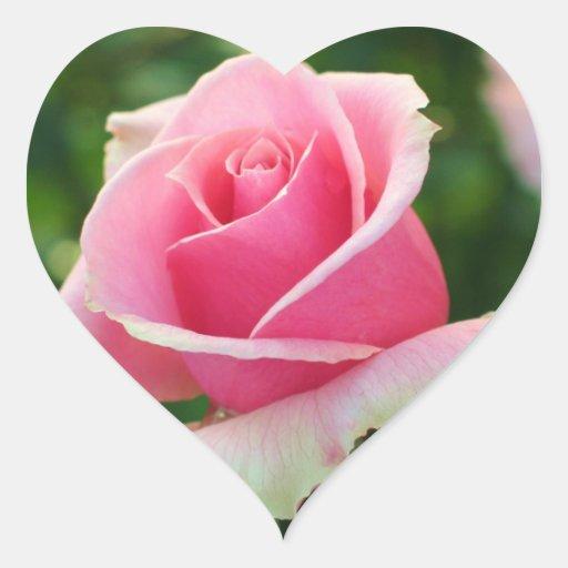 Pegatina color de rosa rosado del corazón