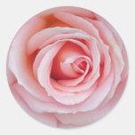 Pegatina color de rosa rosado suave