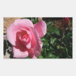 Pegatina color de rosa y del brote rosado