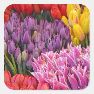 Pegatina colorido de los tulipanes de la primavera