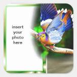 pegatina colorido del cuadrado del pájaro