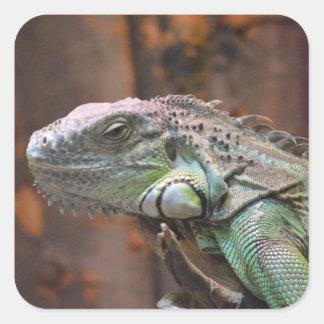 Pegatina con el lagarto colorido de la iguana