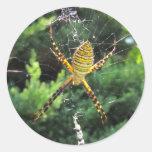 Pegatina congregado del ~ de la araña de jardín
