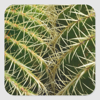 Pegatina cuadrado del cactus