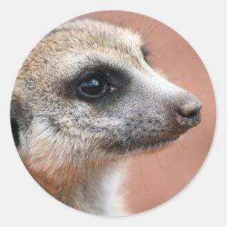Pegatina curioso de Meerkat