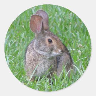 Pegatina curioso del conejo de rabo blanco