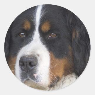 Pegatina de Berner Sennenhund