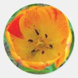 Pegatina de centro del tulipán