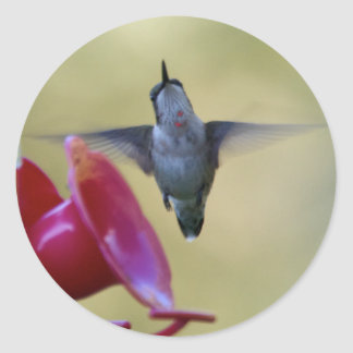 Pegatina de cernido del colibrí