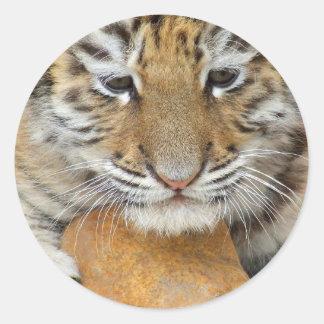 Pegatina de Cub de tigre