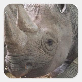 Pegatina de cuernos del rinoceronte