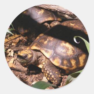 Pegatina de dos tortugas
